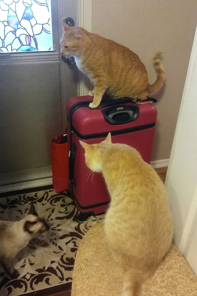 cats on luggage.
