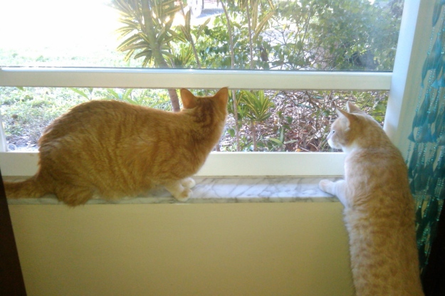 cats Chris and Frankie looking out window