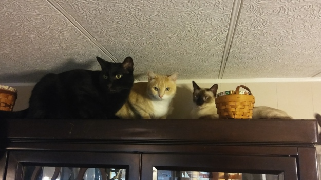 cats on cabinet