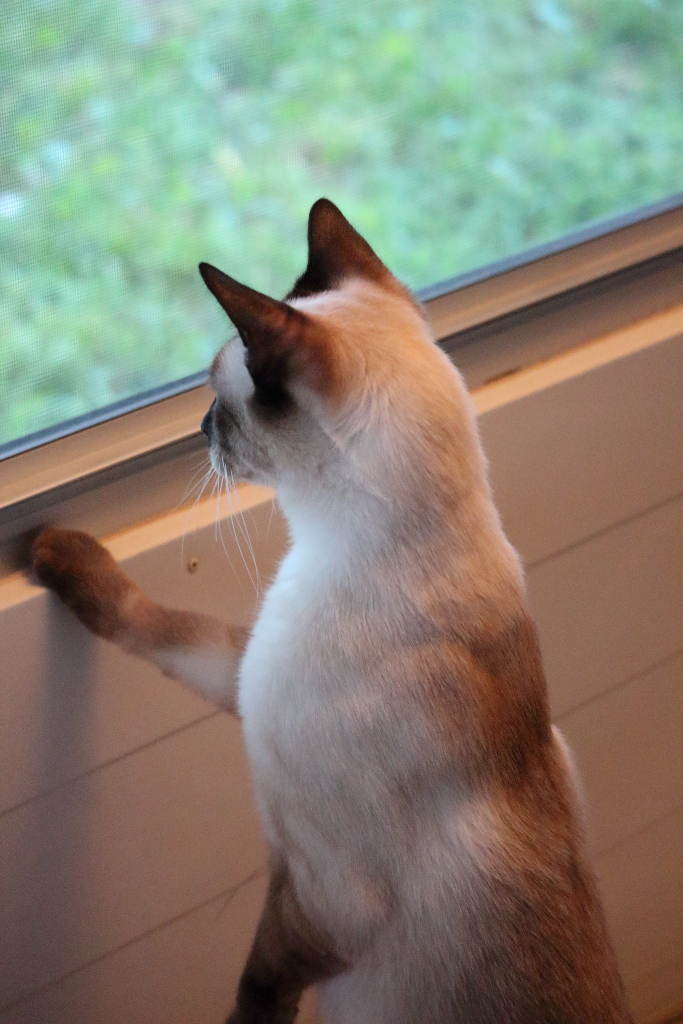 Cat Floki
