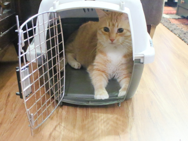 cat Chris in carrier