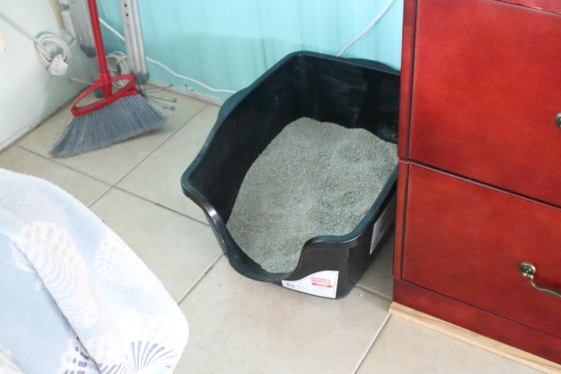 cats litter box