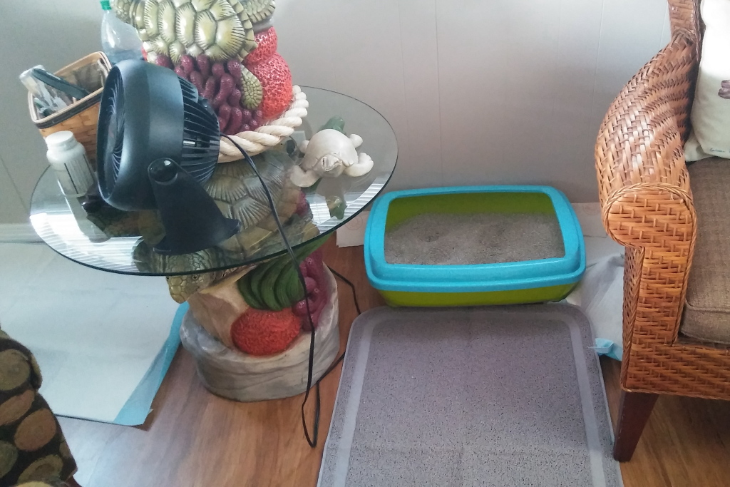 Cat Pooping On Floor Next To Litter Box