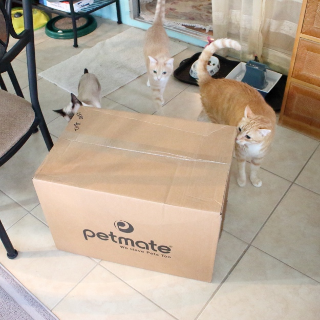 cats and box
