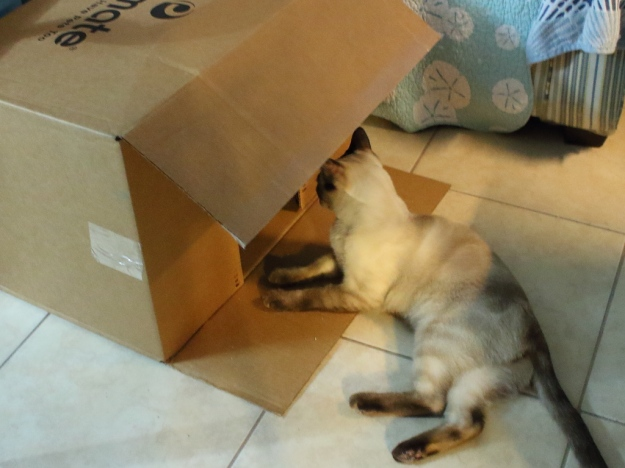 cat and box