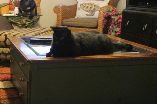 black cat Puck