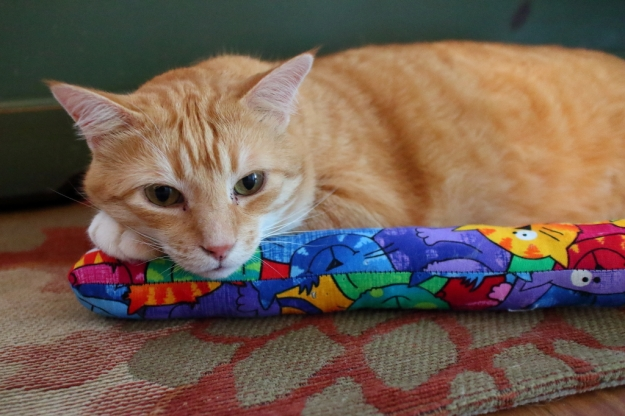 cat resting with kitty kick stix