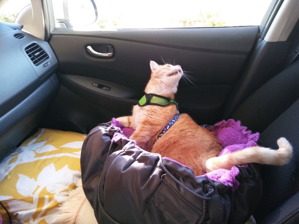 Bad Cat Chris in car