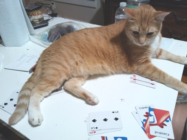 cat on cards
