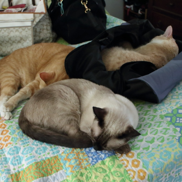cats on bed sleeping