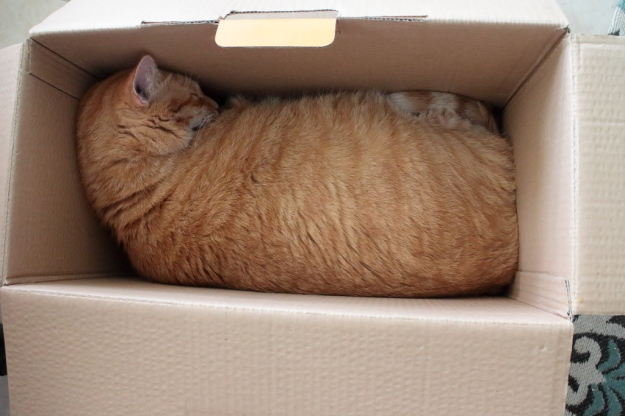 Cat n box sleeping