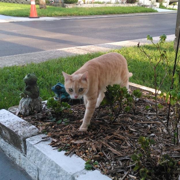 cat Frakie