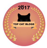 All about cats top 35 cat blogs