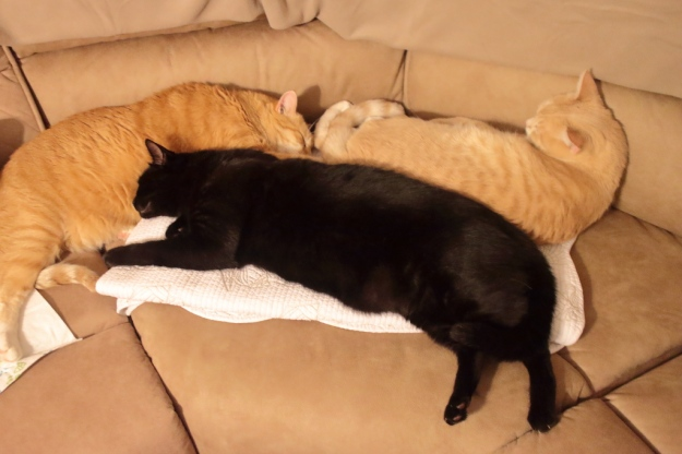 cute cats on sofa