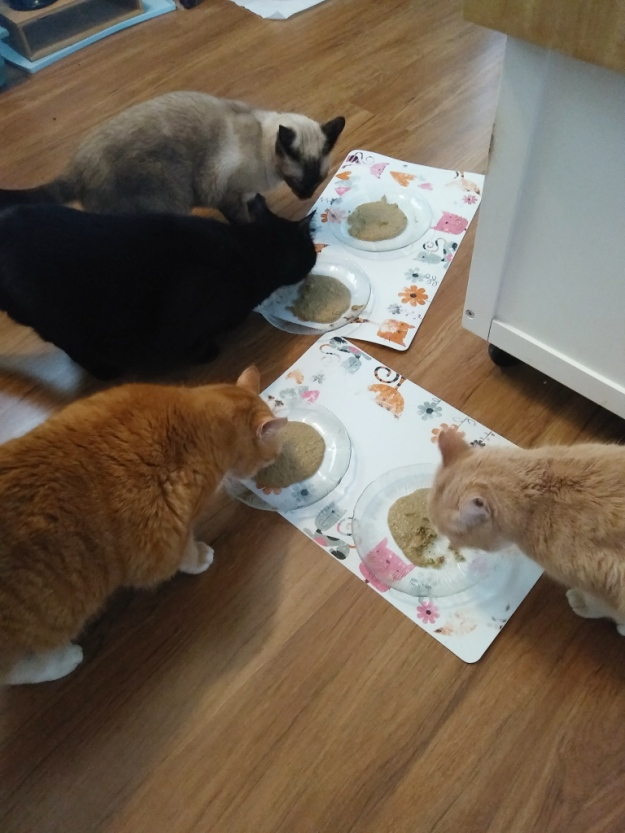 Cats eating Prowl cat food