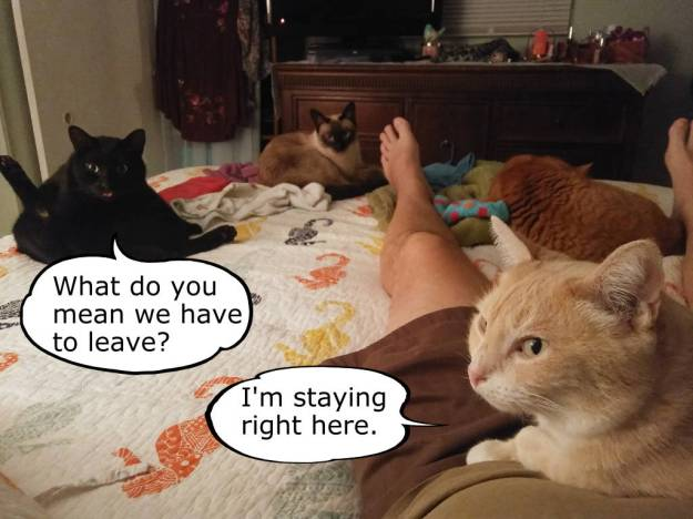 cats on bed funny