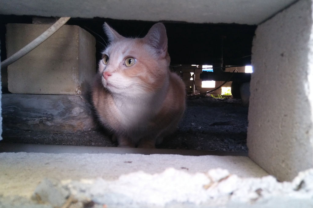 cat outside under home