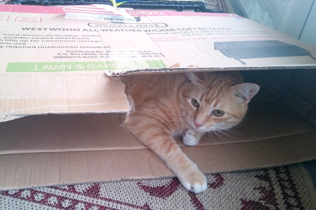 cat Chris in box