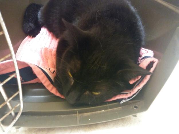 cat Puck at vet.