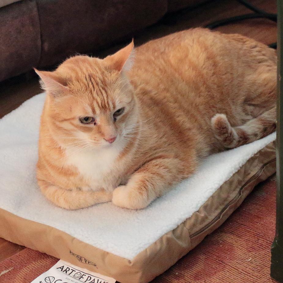 Art of Paws Heated Pet Mat