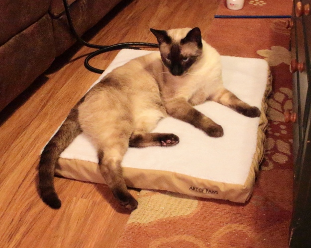 cat on Art of Paws Heated Pet Mat