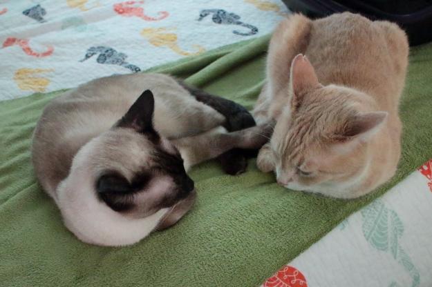 cats Floki and Frankie