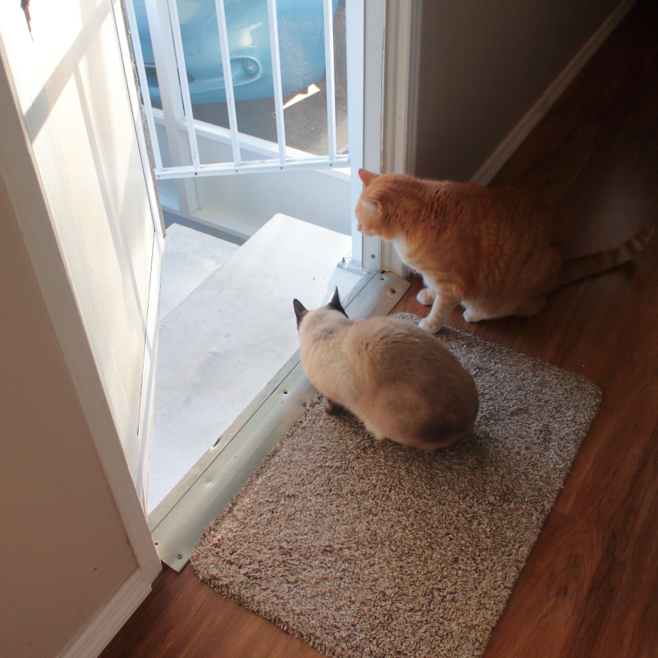 20180313_cats on patio_1137