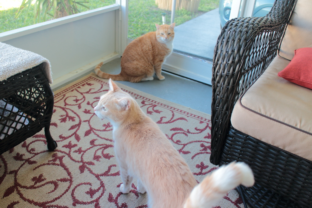 20180313_cats on patio_Frankie and Chris145