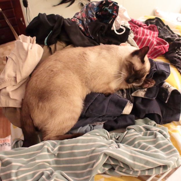 cat on laundry