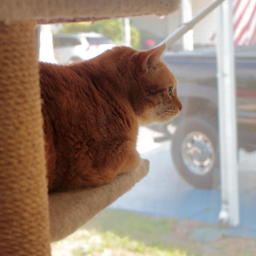 cat Chris