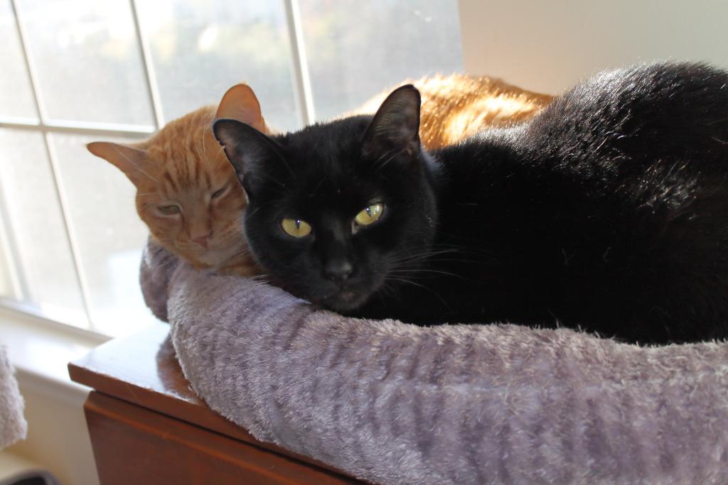 cats Tigger and Flash