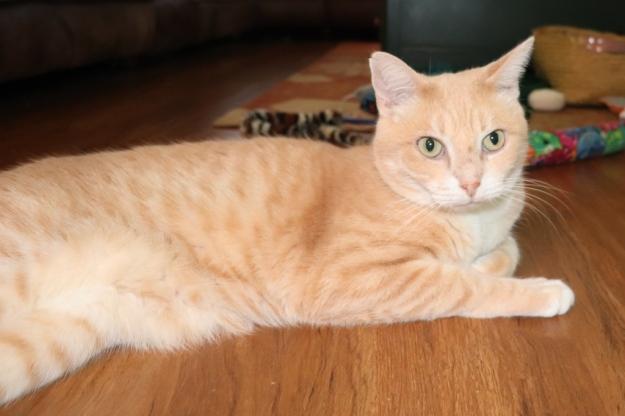 cat Frankie