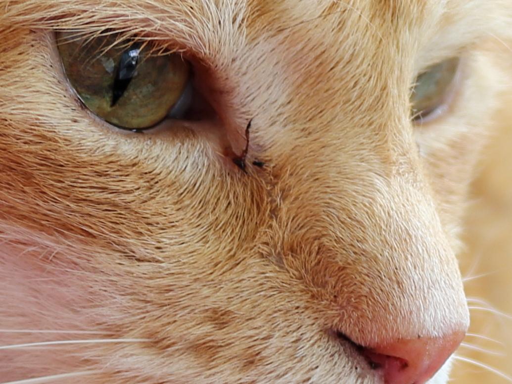 High ISO shot of Cat Chris