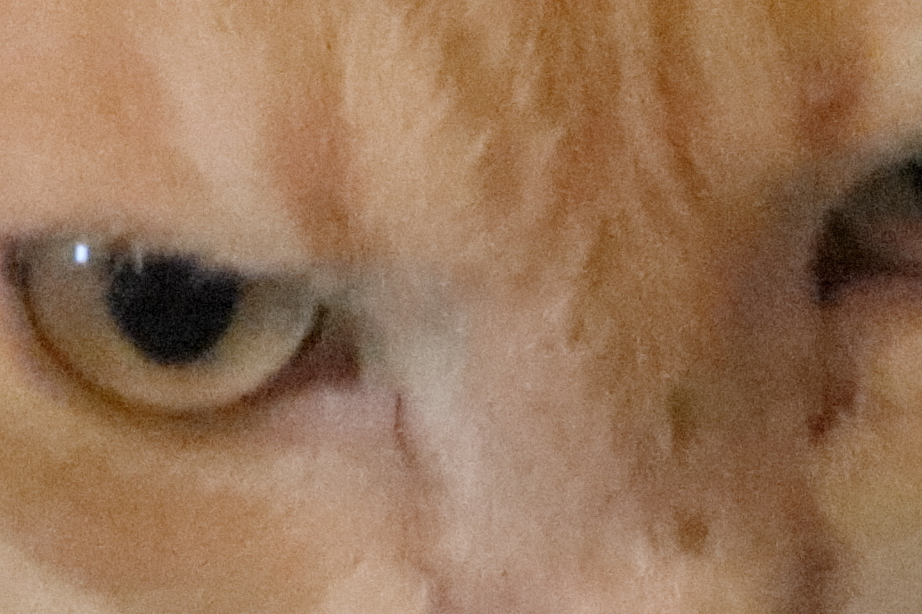 High ISO shot of Cat Frankie close up