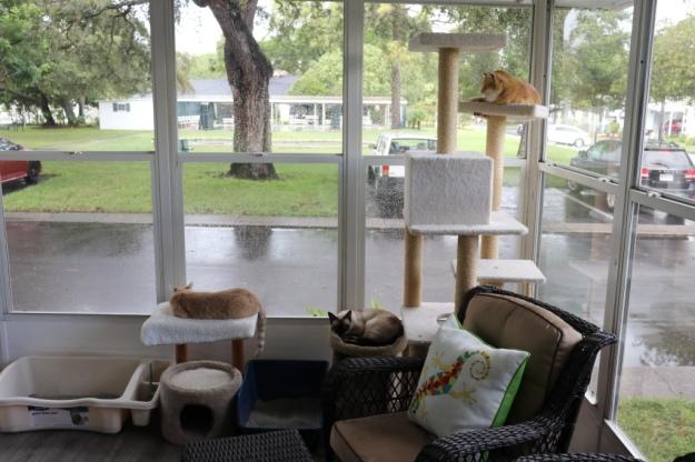 cats lying in window during rain
