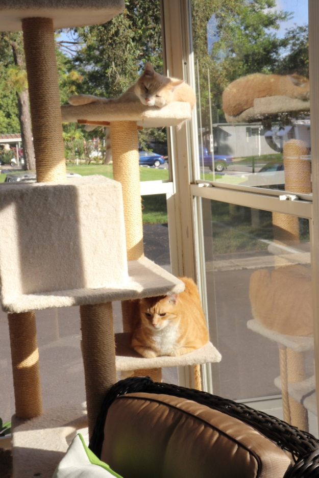 cats in sunshine