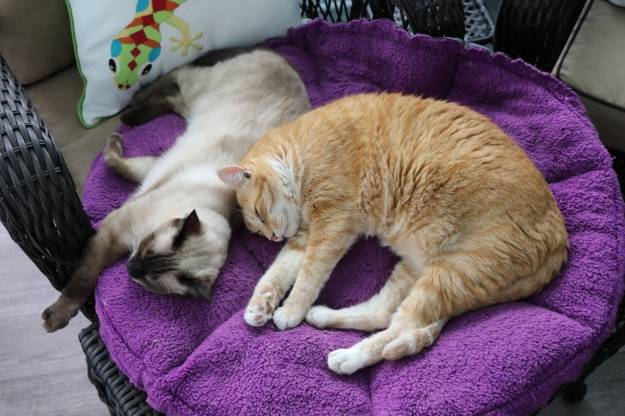 cats on Jackson Galaxy cat bed