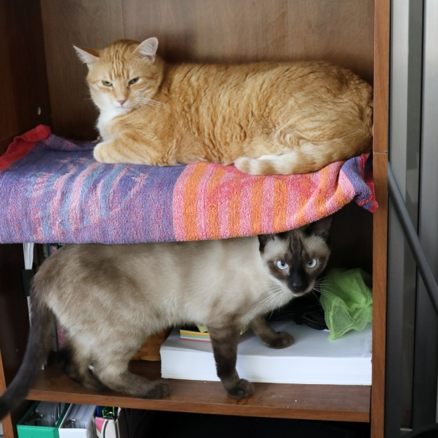cats on shelf