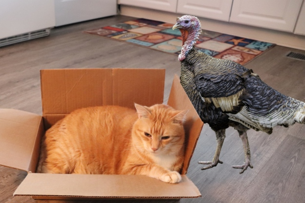 Cat Chris and Turkey