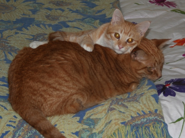 cats Chris and Tigger