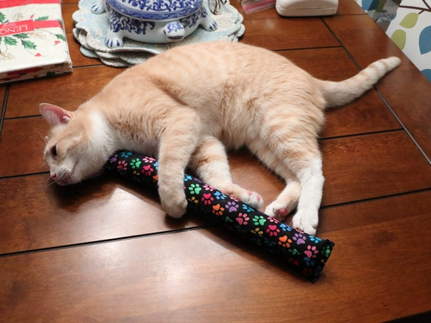 cat with kitty kick styx