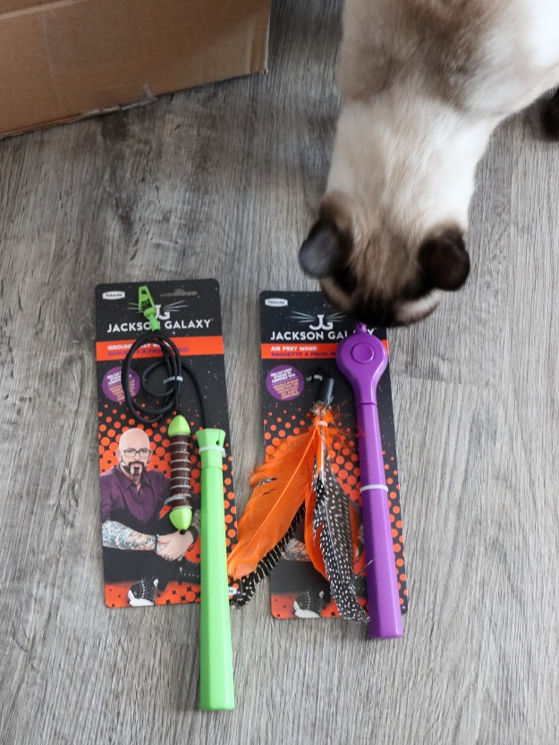 cat Floki with Jackson Galaxy toys
