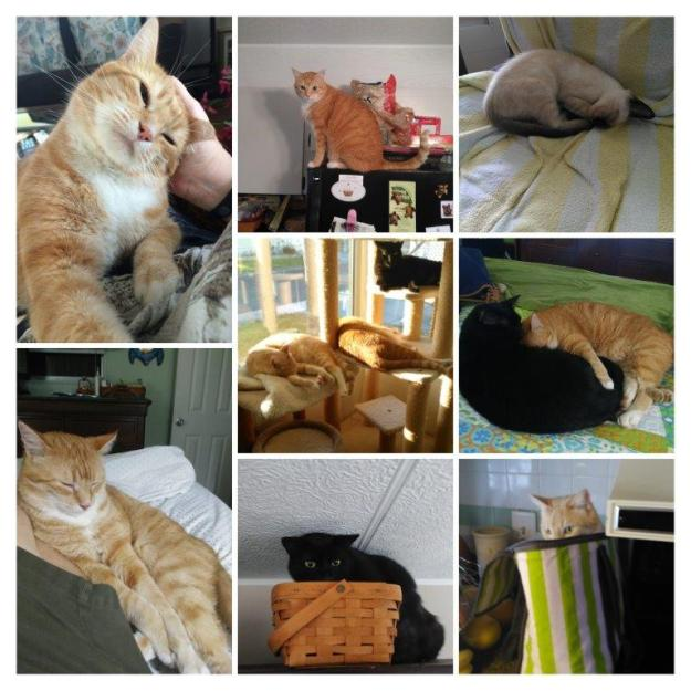 World cat day collage