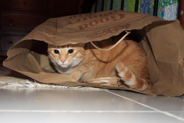 Our cat Chris in paper bag.