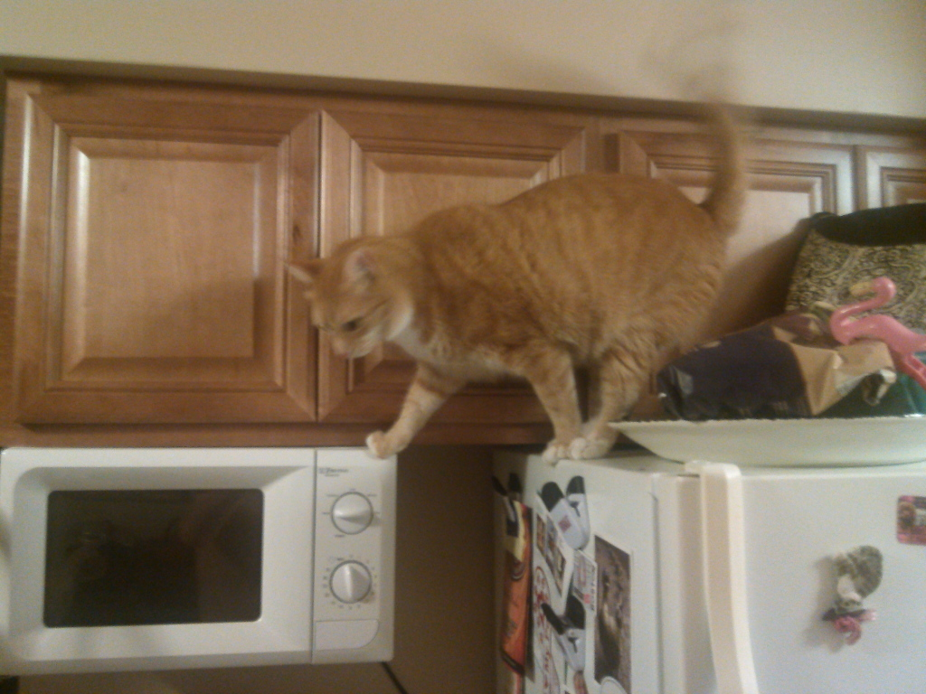 Bad Cat Chris trying to open cabinet