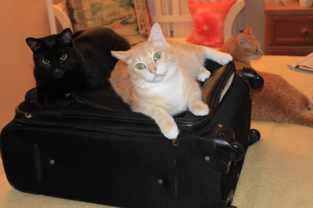 Cats on suitcase
